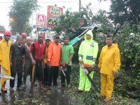 Kapolres Turun Jalan Atasi Pohon Tumbang, AKBP Dedy Tabrani: Ini Merupakan Tugas Kami